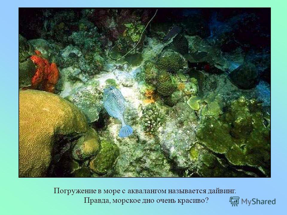 Под водой ныряльщики через специальную трубку дышат кислородом, который находится в баллоне акваланга. Под водой ныряльщики через специальную трубку дышат кислородом, который находится в баллоне акваланга.