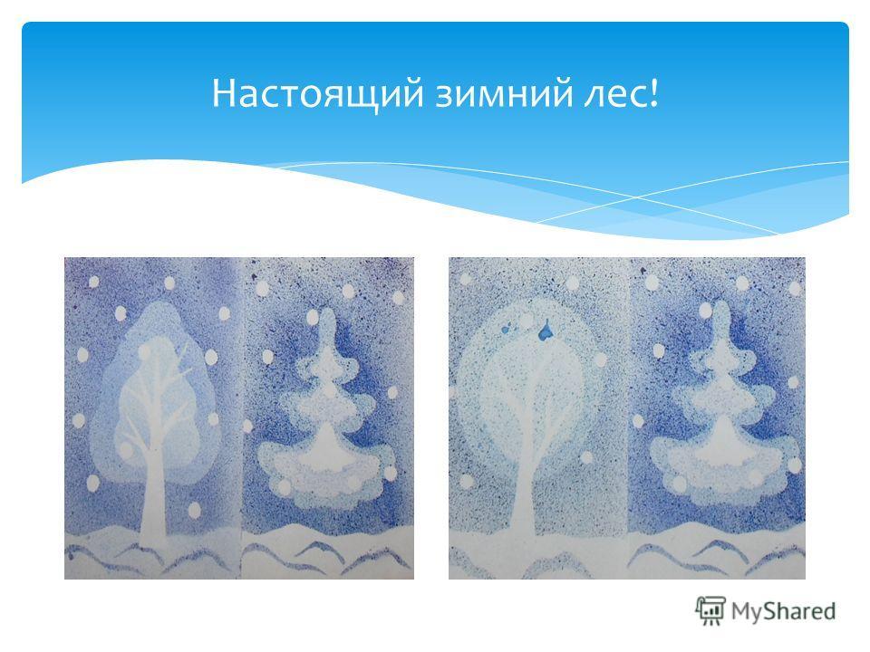Настоящий зимний лес!