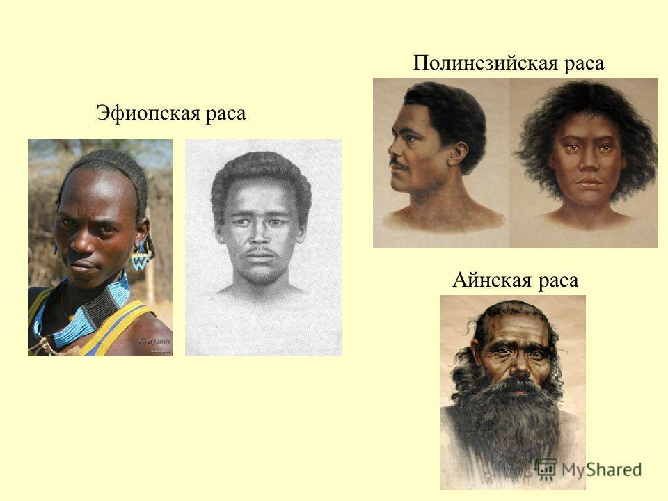Эфиопская раса Полинезийская раса Айнская раса