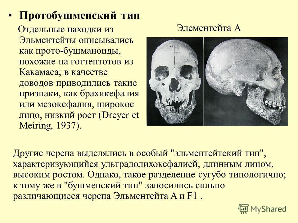 Протобушменский тип Отдельные находки из Эльментейты описывались как прото-бушманоиды, похожие на готтентотов из Какамаса; в качестве доводов приводились такие признаки, как брахикефалия или мезокефалия, широкое лицо, низкий рост (Dreyer et Meiring,