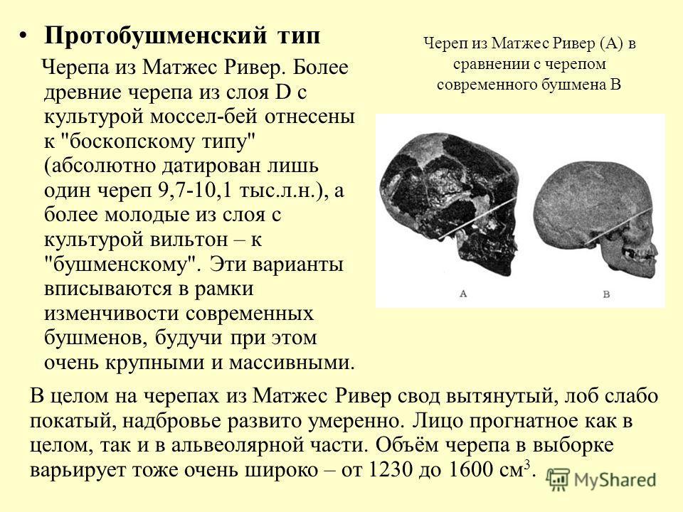 Протобушменский тип Черепа из Матжес Ривер. Более древние черепа из слоя D с культурой моссел-бей отнесены к