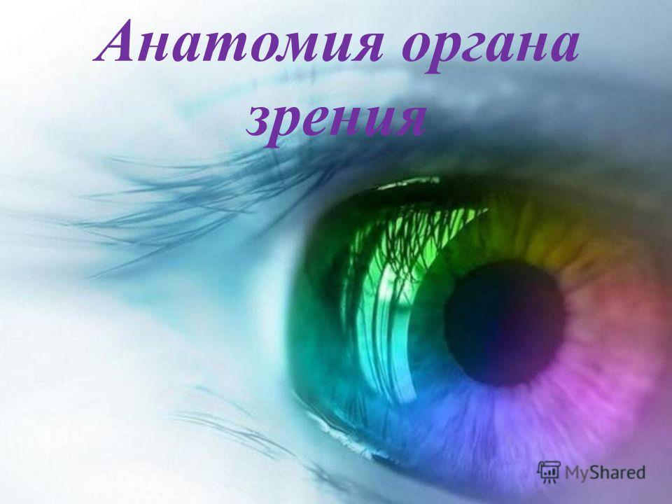 Анатомия органа зрения.