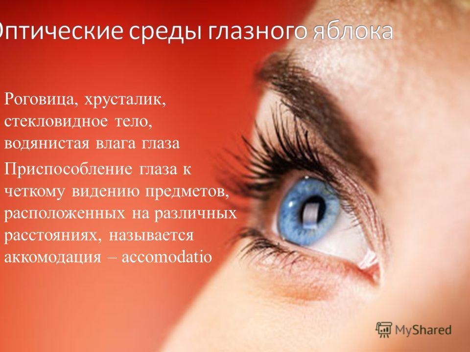 Роговица, хрусталик, стекловидное тело, водянистая влага глаза Приспособление глаза к четкому видению предметов, расположенных на различных расстояниях, называется аккомодация – accomodatio