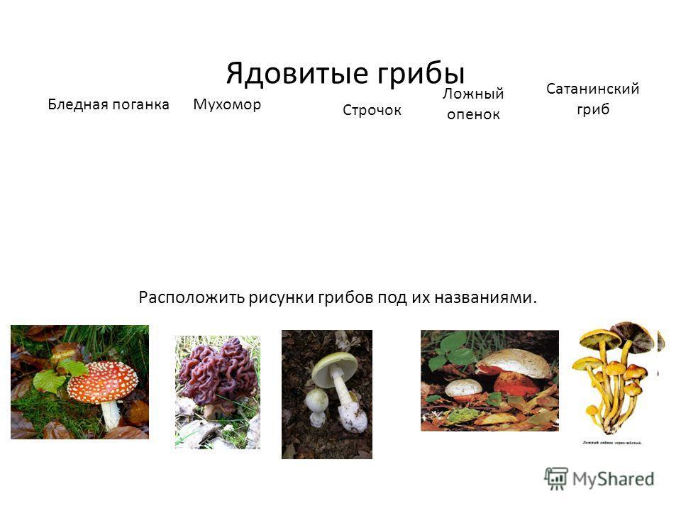 Ядовитые грибы Бледная поганкаМухомор Строчок Ложный опенок Сатанинский гриб Расположить рисунки грибов под их названиями.