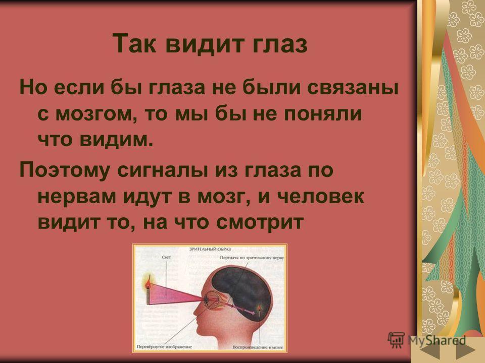 Так видит глаз Но если бы глаза не были связаны с мозгом, то мы бы не поняли что видим. Поэтому сигналы из глаза по нервам идут в мозг, и человек видит то, на что смотрит