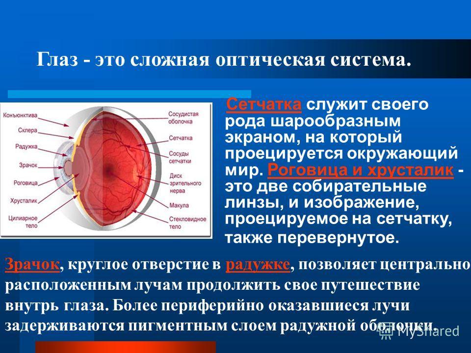 Глаз - это сложная оптическая система. Сетчатка служит своего рода шарообразным экраном, на который проецируется окружающий мир. Роговица и хрусталик - это две собирательные линзы, и изображение, проецируемое на сетчатку, также перевернутое. ЗрачокЗр