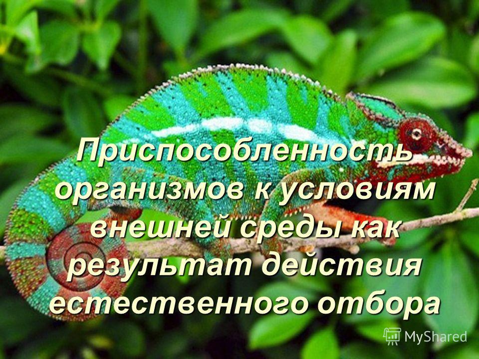 Приспособленность организмов к условиям внешней среды как результат действия естественного отбора