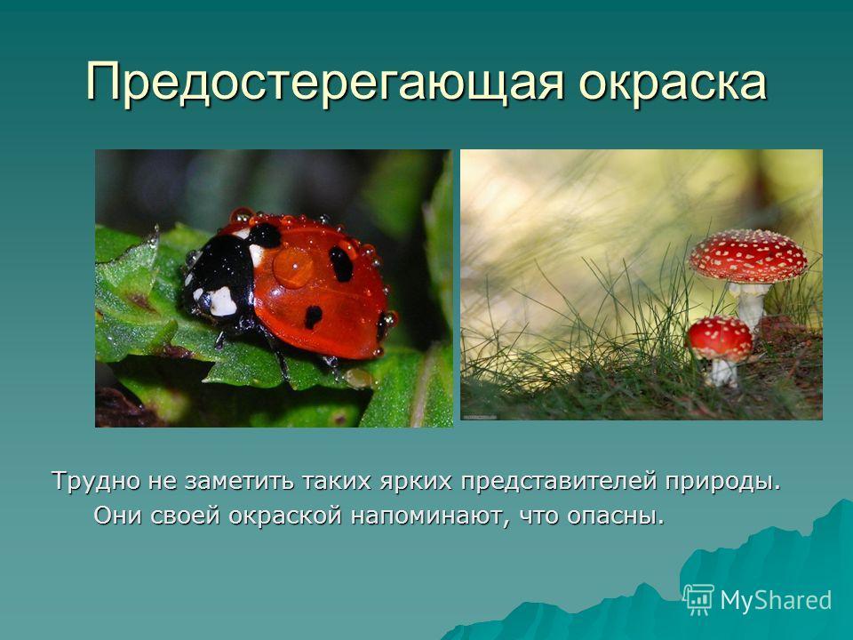 Предостерегающая окраска Трудно не заметить таких ярких представителей природы. Они своей окраской напоминают, что опасны. Они своей окраской напоминают, что опасны.