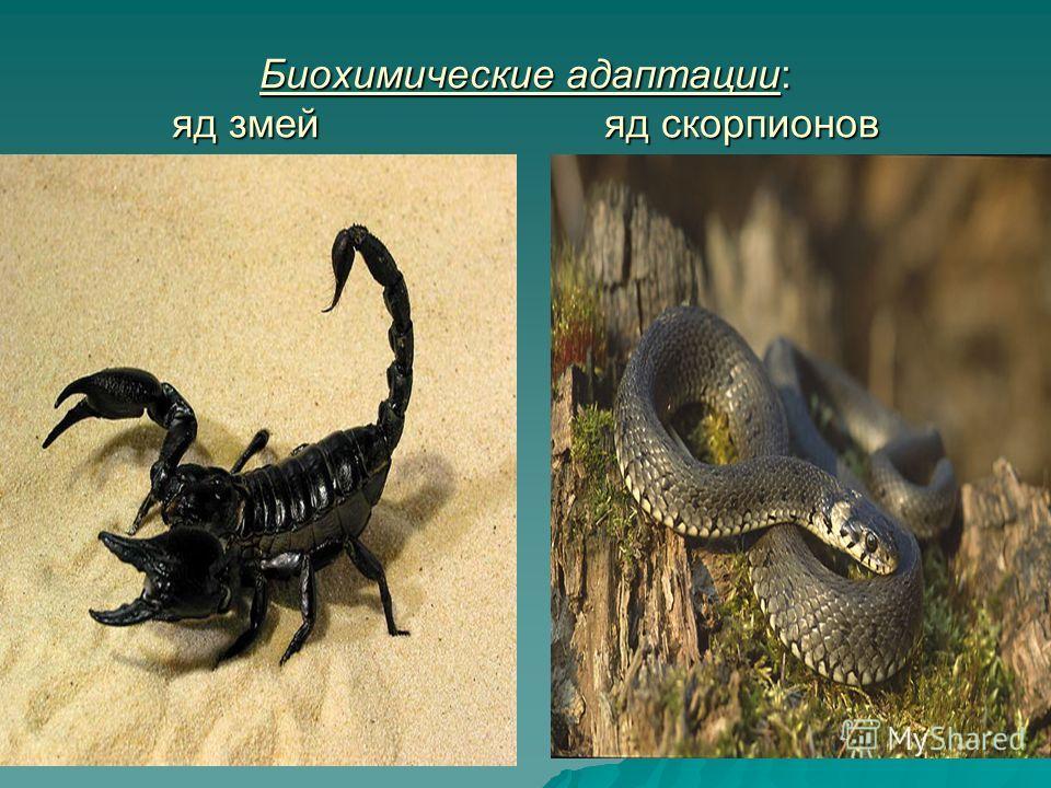 Биохимические адаптации: яд змей яд скорпионов
