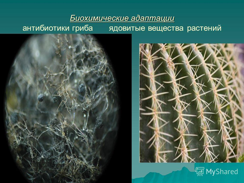 Биохимические адаптации Биохимические адаптации антибиотики гриба ядовитые вещества растений