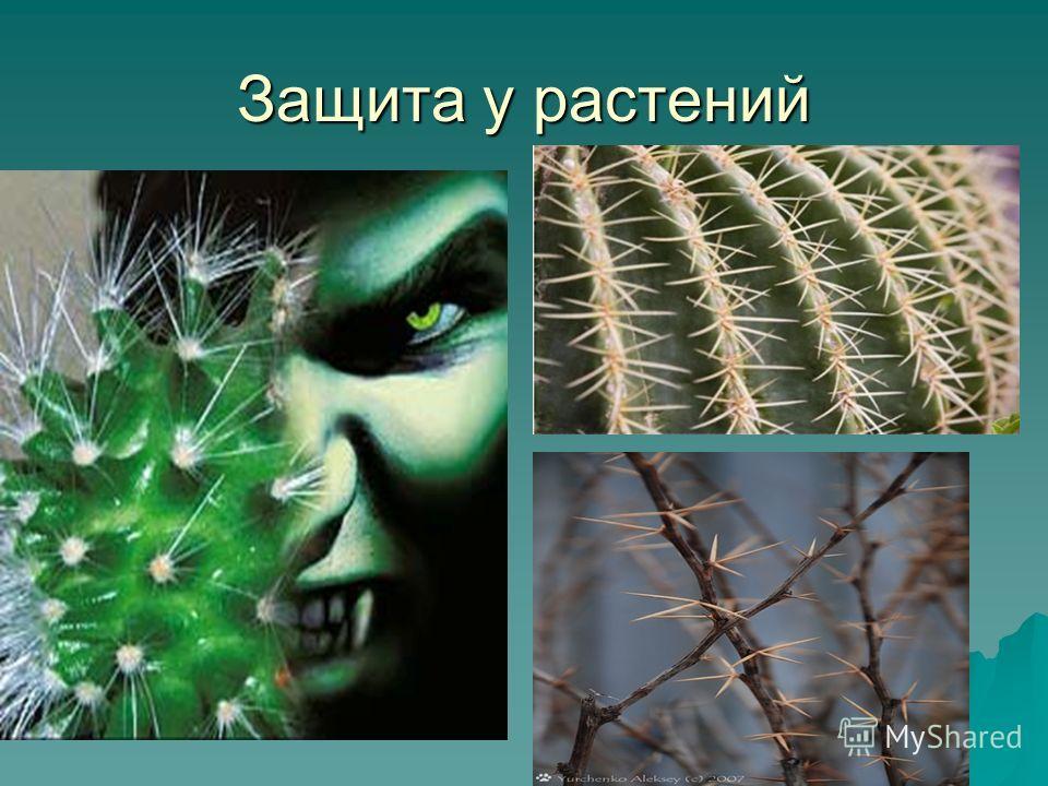 Защита у растений