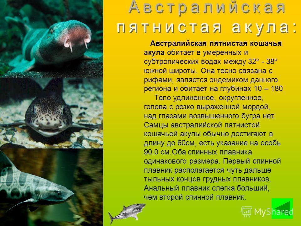 Австралийская пятнистая кошачья акула обитает в умеренных и субтропических водах между 32° - 38° южной широты. Она тесно связана с рифами, является эндемиком данного региона и обитает на глубинах 10 – 180 Тело удлиненное, округленное, голова с резко