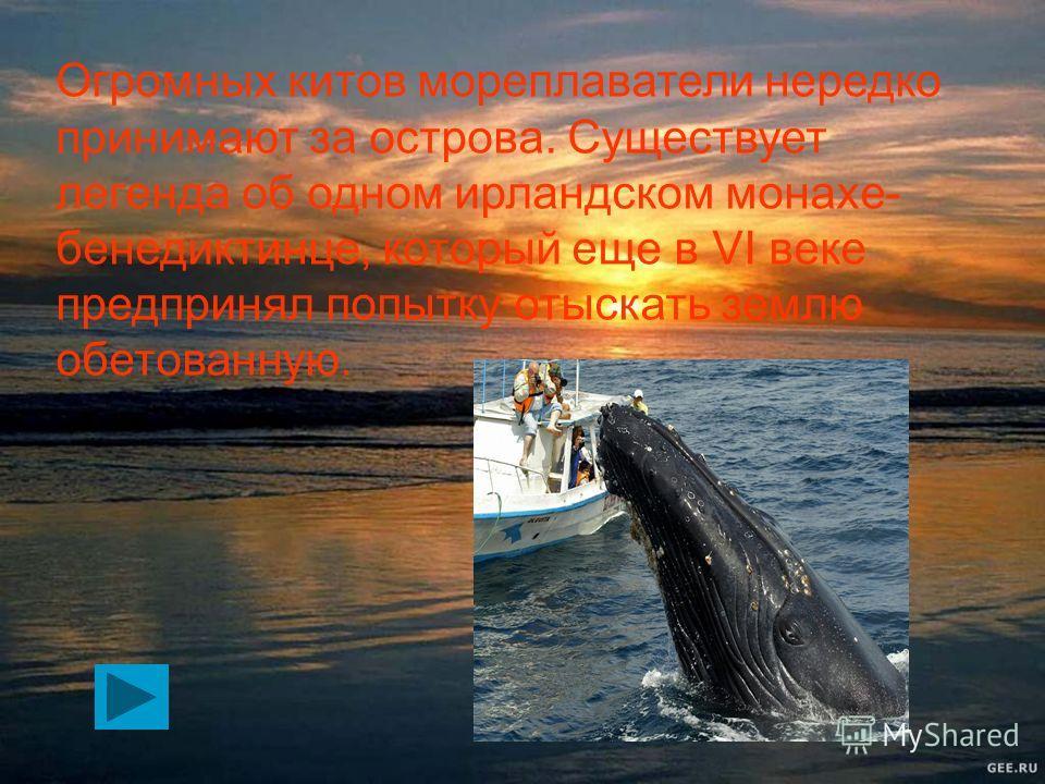 Общими чертами злых китов можно назвать жадность и агрессивность. Они всегда хотят чьей-то крови и плавают по океанам и морям в поисках кораблей. Нападают они следующим образом: внезапно высоко выпрыгивают из воды и бросаются на судно сверху, мгновен