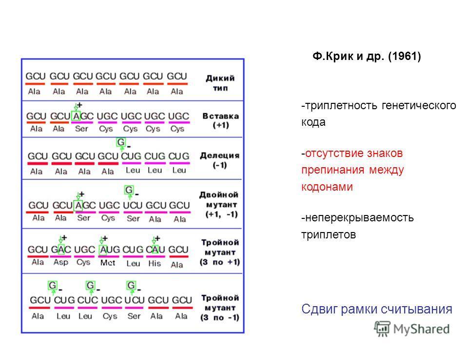 -триплетность генетического кода -отсутствие знаков препинания между кодонами -неперекрываемость триплетов Сдвиг рамки считывания Ф.Крик и др. (1961)