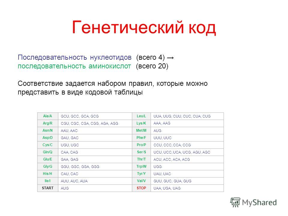 Генетический код Последовательность нуклеотидов (всего 4) последовательность аминокислот (всего 20) Соответствие задается набором правил, которые можно представить в виде кодовой таблицы Ala/AGCU, GCC, GCA, GCGLeu/LUUA, UUG, CUU, CUC, CUA, CUG Arg/RC