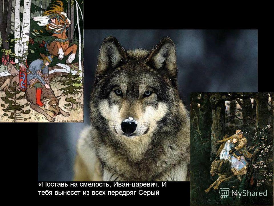 «Поставь на смелость, Иван-царевич. И тебя вынесет из всех передряг Серый волк».