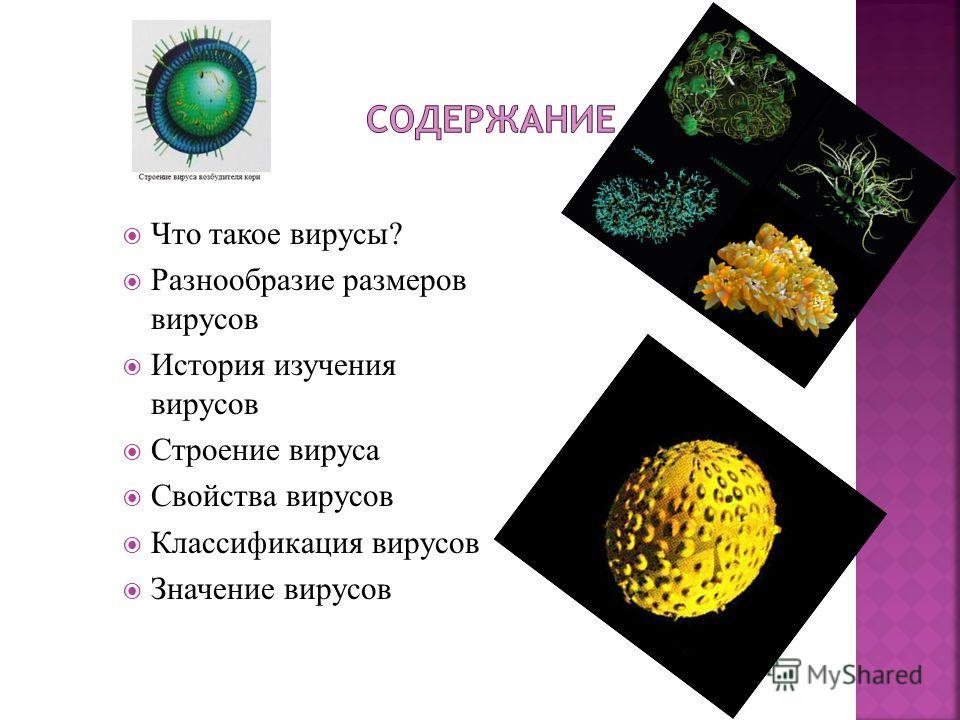 Что такое вирусы? Разнообразие размеров вирусов История изучения вирусов Строение вируса Свойства вирусов Классификация вирусов Значение вирусов