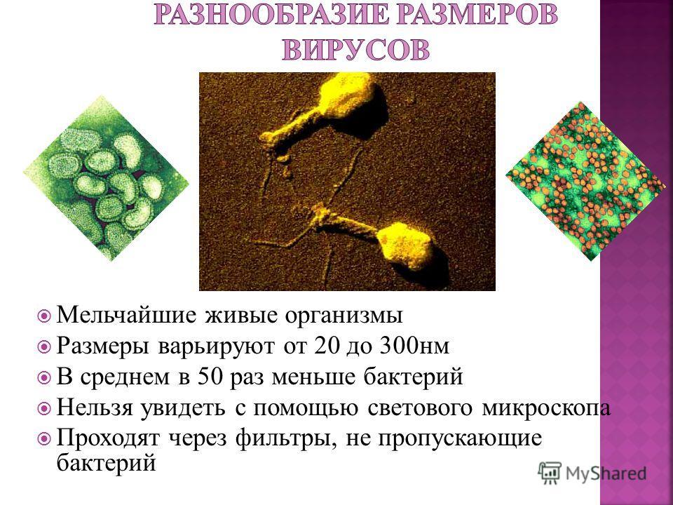 Мельчайшие живые организмы Размеры варьируют от 20 до 300нм В среднем в 50 раз меньше бактерий Нельзя увидеть с помощью светового микроскопа Проходят через фильтры, не пропускающие бактерий