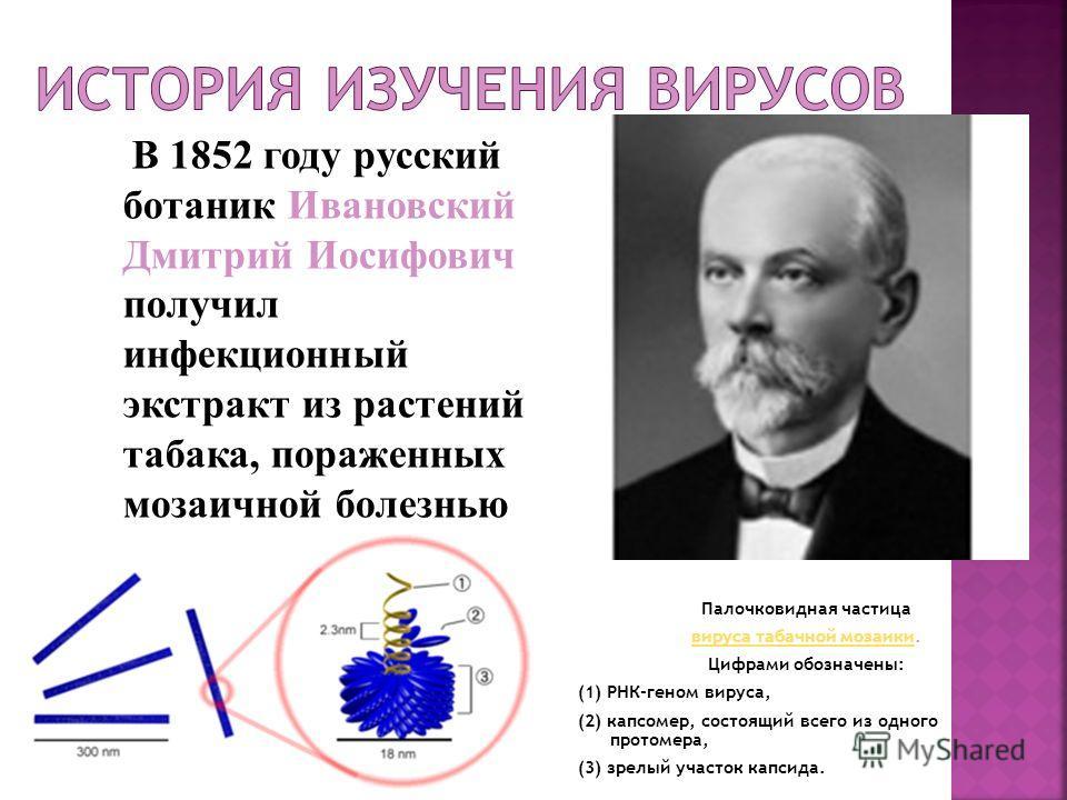 В 1852 году русский ботаник Ивановский Дмитрий Иосифович получил инфекционный экстракт из растений табака, пораженных мозаичной болезнью Палочковидная частица вируса табачной мозаикивируса табачной мозаики. Цифрами обозначены: (1) РНК-геном вируса, (