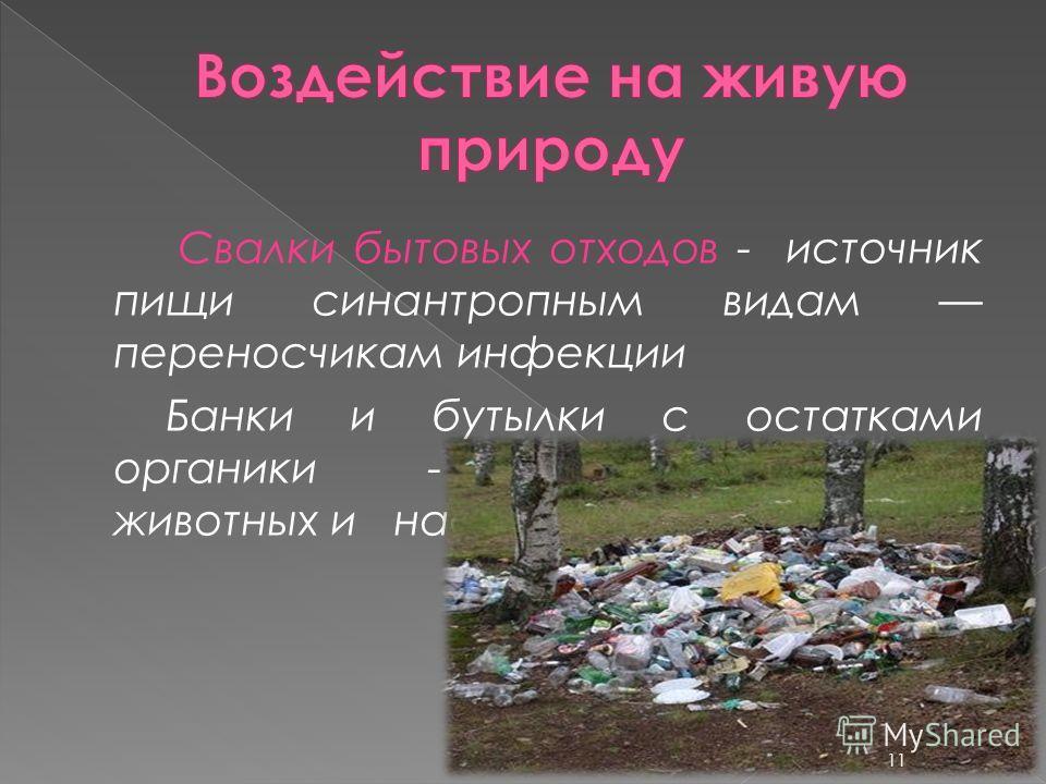 Свалки бытовых отходов - источник пищи синантропным видам переносчикам инфекции Банки и бутылки с остатками органики - ловушки для диких животных и насекомых 11