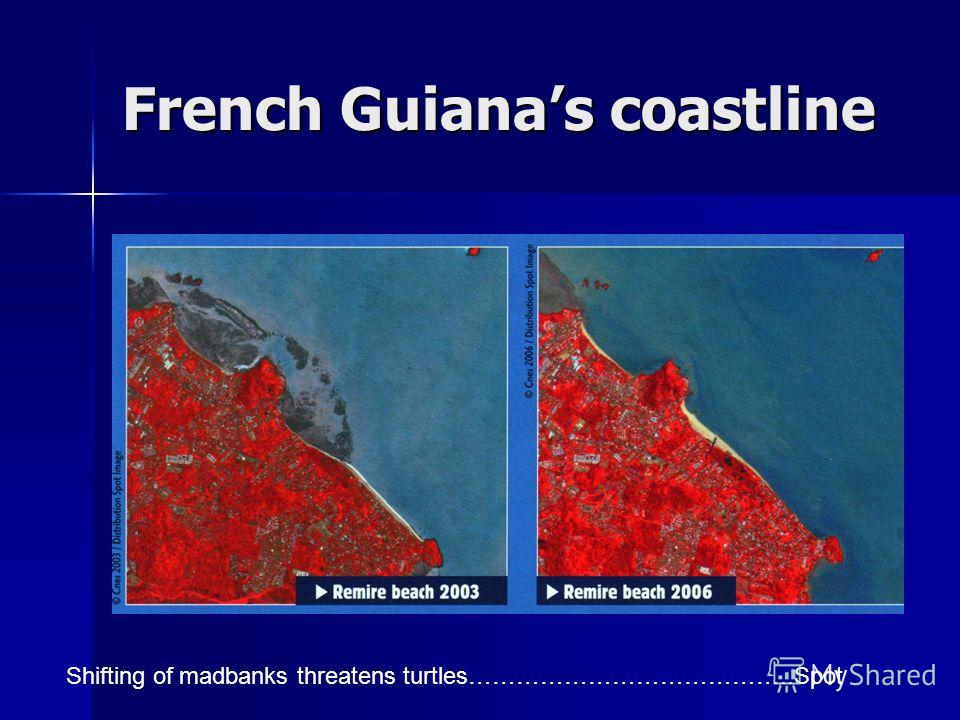 French Guianas coastline Shifting of madbanks threatens turtles…………………………………..Spot