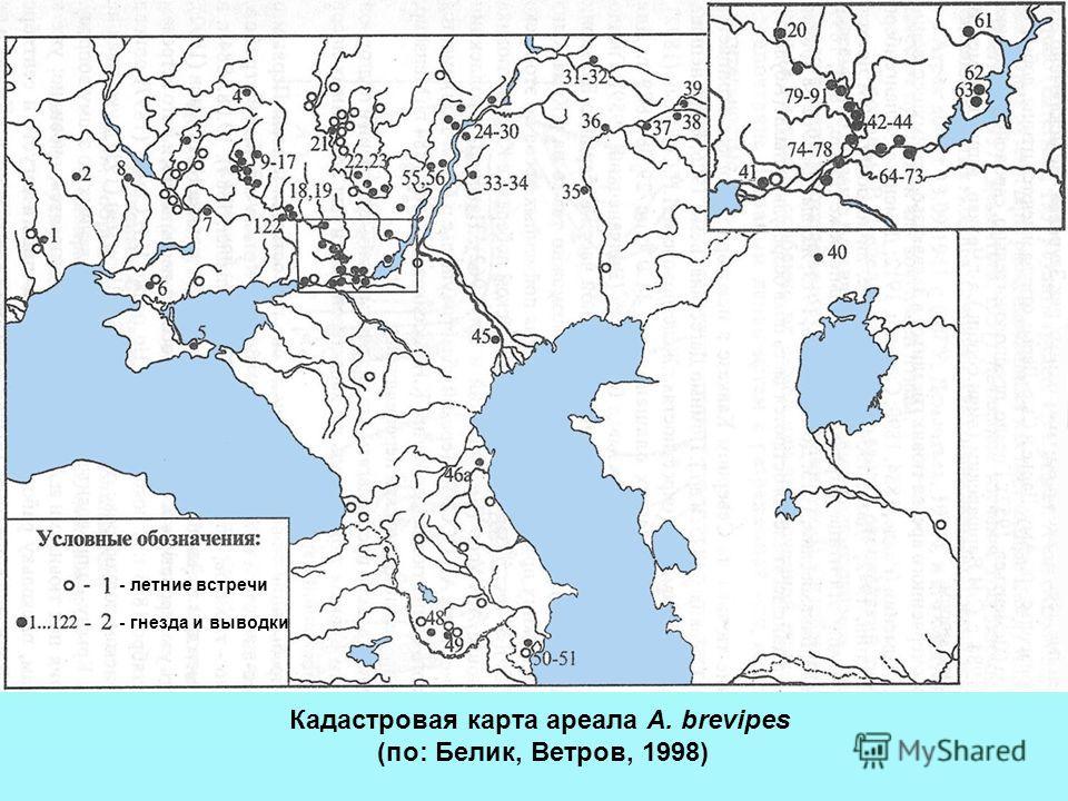 - летние встречи - гнезда и выводки Кадастровая карта ареала A. brevipes (по: Белик, Ветров, 1998)