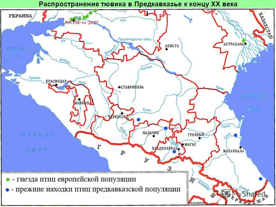 Распространение тювика в Предкавказье к концу ХХ века