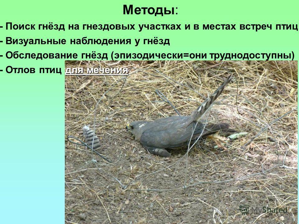 Методы: - Поиск гнёзд на гнездовых участках и в местах встреч птиц - Визуальные наблюдения у гнёзд - Обследование гнёзд (эпизодически=они труднодоступны) для мечения - Отлов птиц для мечения