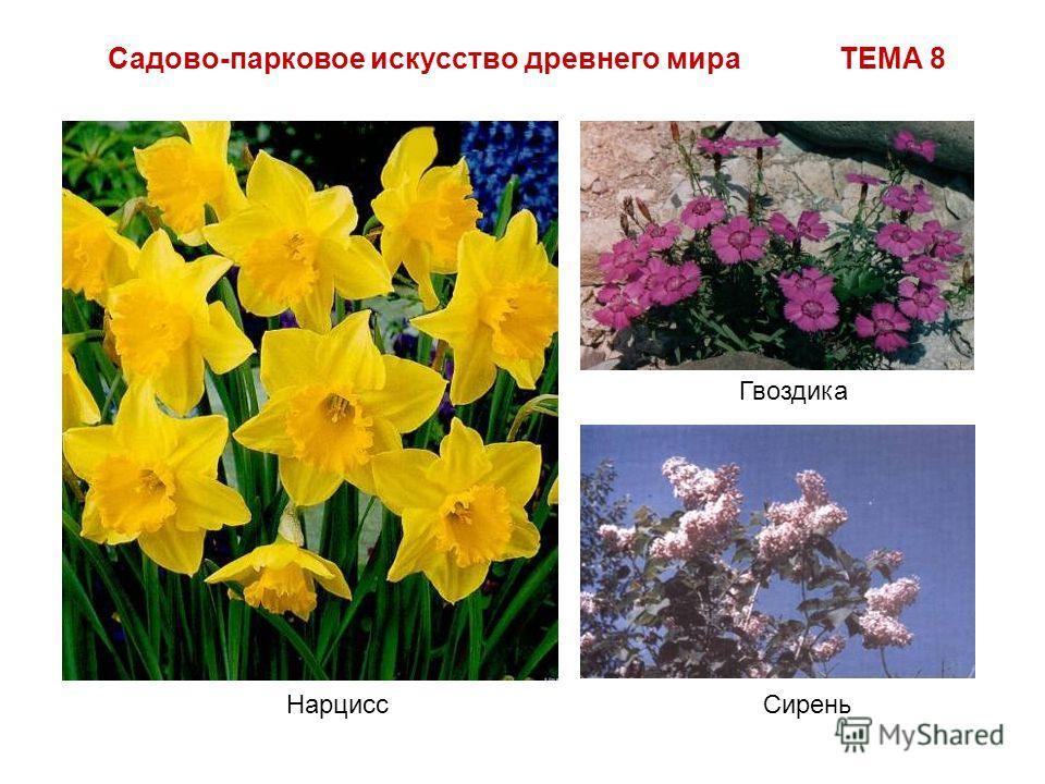 Садово-парковое искусство древнего мира ТЕМА 8 Нарцисс Гвоздика Сирень