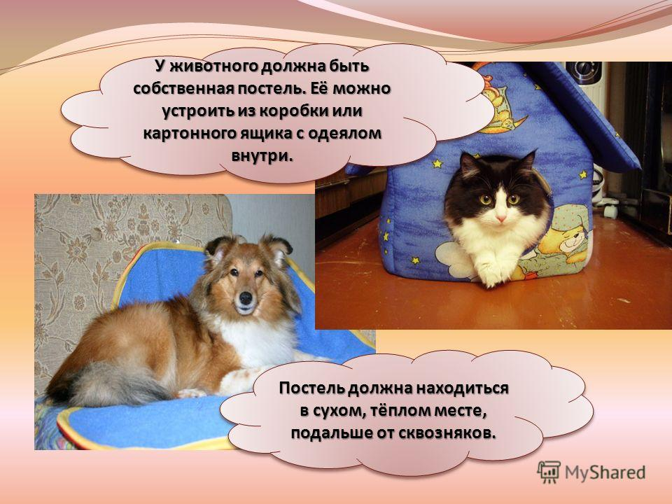 Постель должна находиться в сухом, тёплом месте, подальше от сквозняков. У животного должна быть собственная постель. Её можно устроить из коробки или картонного ящика с одеялом внутри.