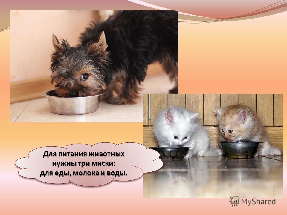 Для питания животных нужны три миски: для еды, молока и воды.