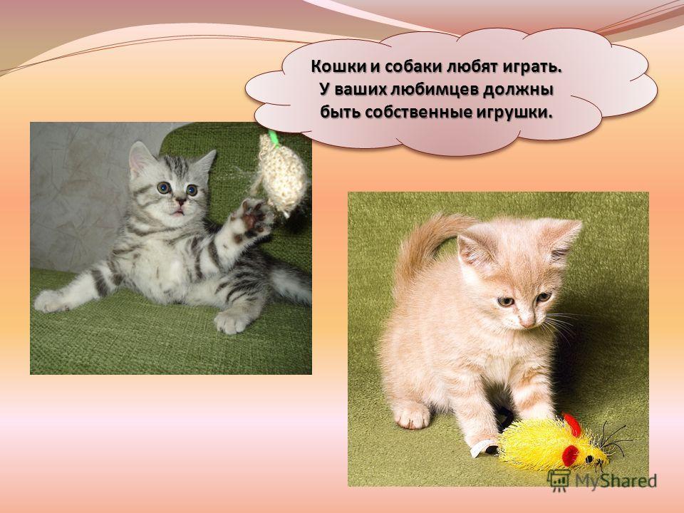 Кошки и собаки любят играть. У ваших любимцев должны быть собственные игрушки.