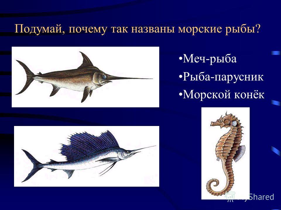 Заполни «ступеньки» названиями морских животных