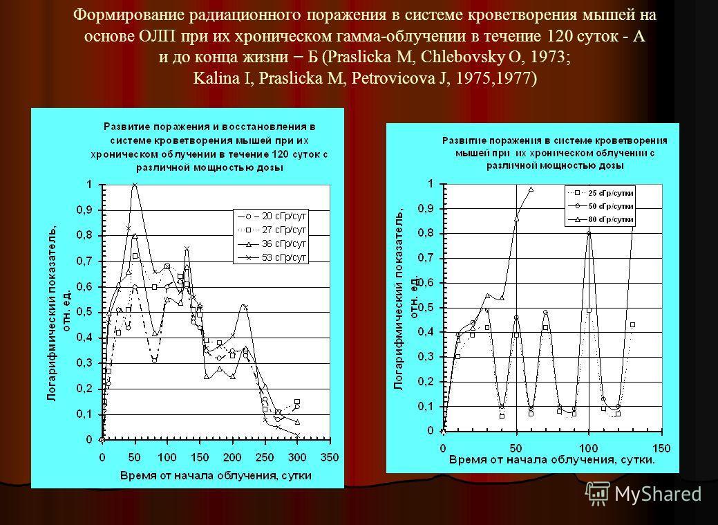 Формирование радиационного поражения в системе кроветворения мышей на основе ОЛП при их хроническом гамма-облучении в течение 120 суток - А и до конца жизни – Б (Praslicka M, Chlebovsky O, 1973; Kalina I, Praslicka M, Petrovicova J, 1975,1977)