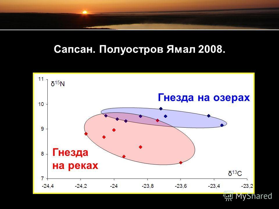 Сапсан. Полуостров Ямал 2008. Гнезда на озерах Гнезда на реках