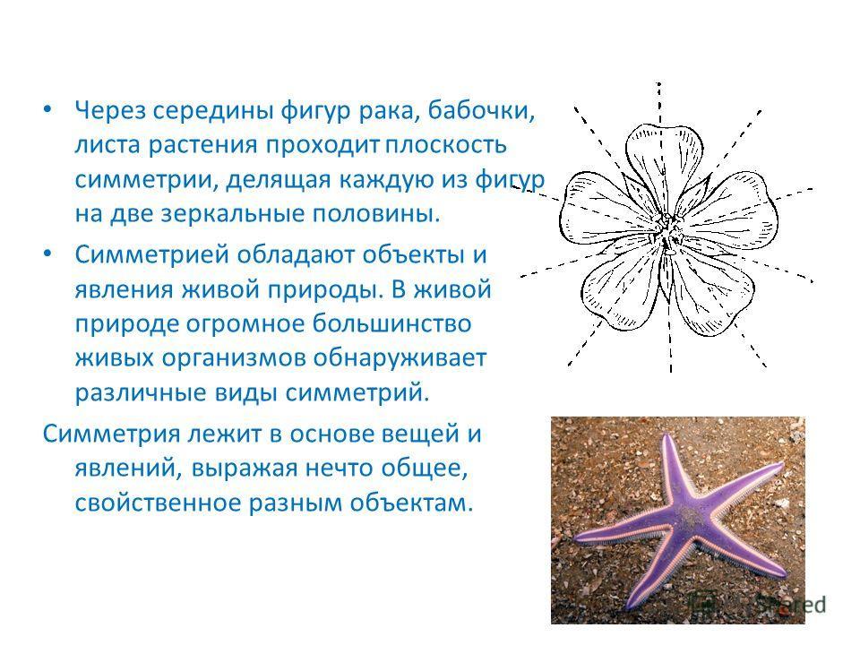 Через середины фигур рака, бабочки, листа растения проходит плоскость симметрии, делящая каждую из фигур на две зеркальные половины. Симметрией обладают объекты и явления живой природы. В живой природе огромное большинство живых организмов обнаружива
