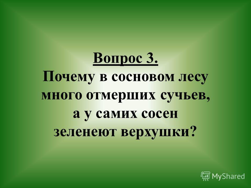 Вопрос 3. Почему в сосновом лесу много отмерших сучьев, а у самих сосен зеленеют верхушки?
