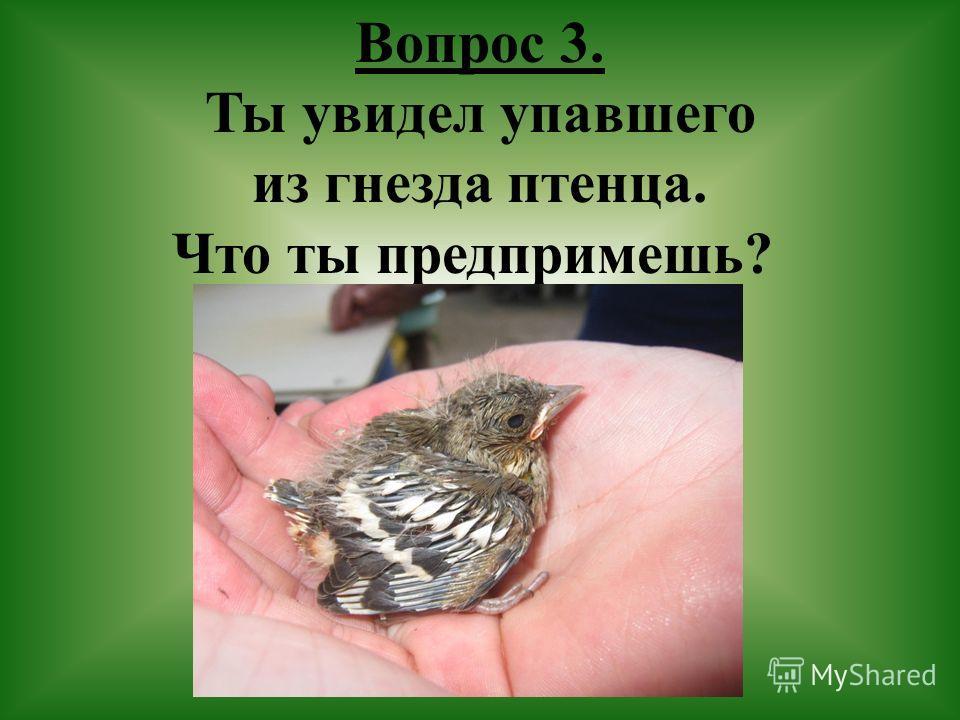 Вопрос 3 ты увидел упавшего из гнезда