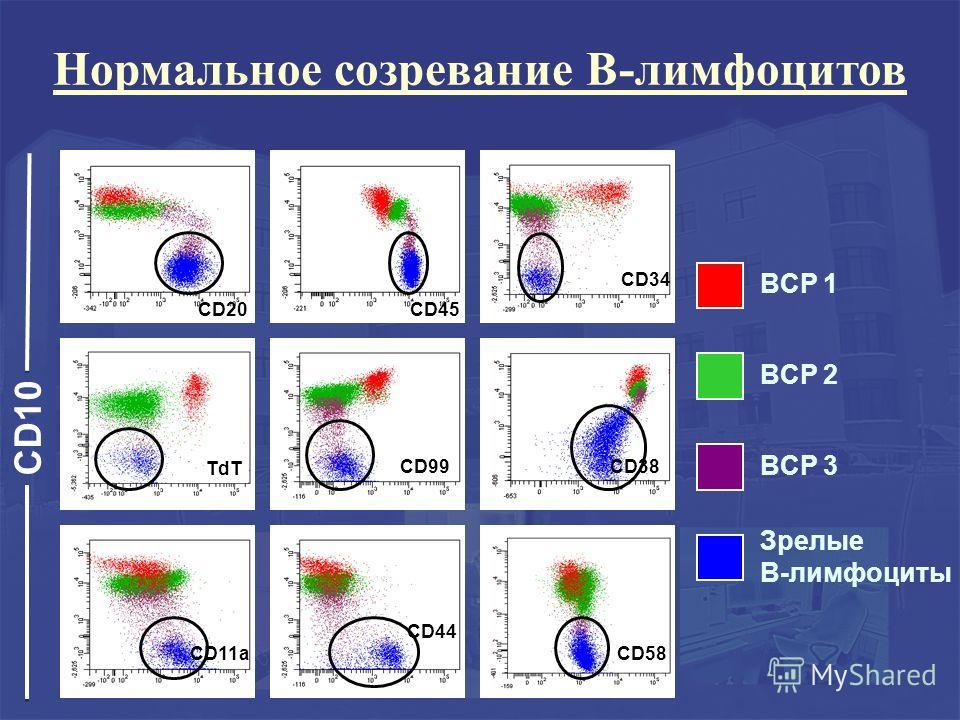 CD10 BCP 1 BCP 2 BCP 3 Зрелые В-лимфоциты Нормальное созревание В-лимфоцитов CD20CD45 CD34 TdT CD99CD38 CD11a CD44 CD58