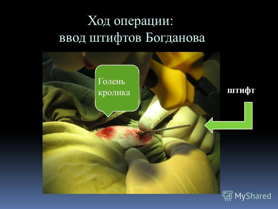 Ход операции: ввод штифтов Богданова Голень кролика штифт
