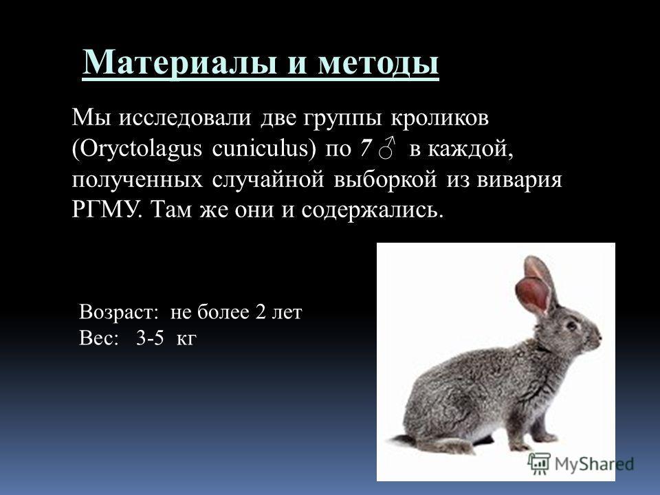 Материалы и методы Мы исследовали две группы кроликов (Oryctolagus cuniculus) по 7 в каждой, полученных случайной выборкой из вивария РГМУ. Там же они и содержались. Возраст: не более 2 лет Вес: 3-5 кг