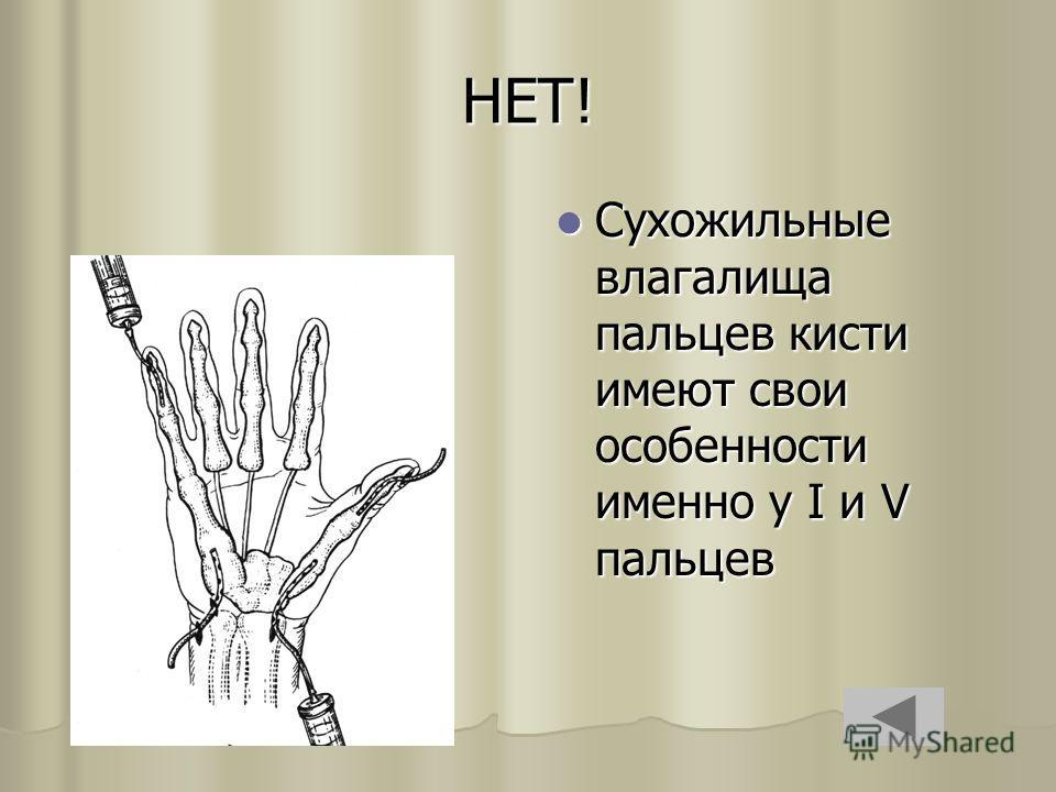 НЕТ! Сухожильные влагалища пальцев кисти имеют свои особенности именно у I и V пальцев Сухожильные влагалища пальцев кисти имеют свои особенности именно у I и V пальцев