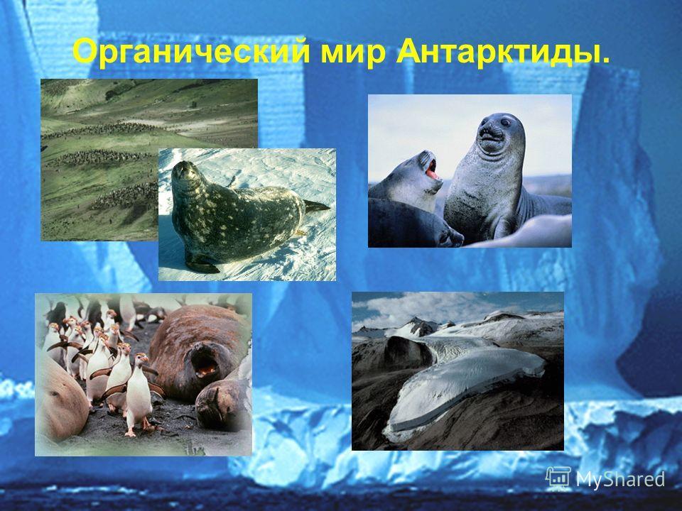 Органический мир Антарктиды.