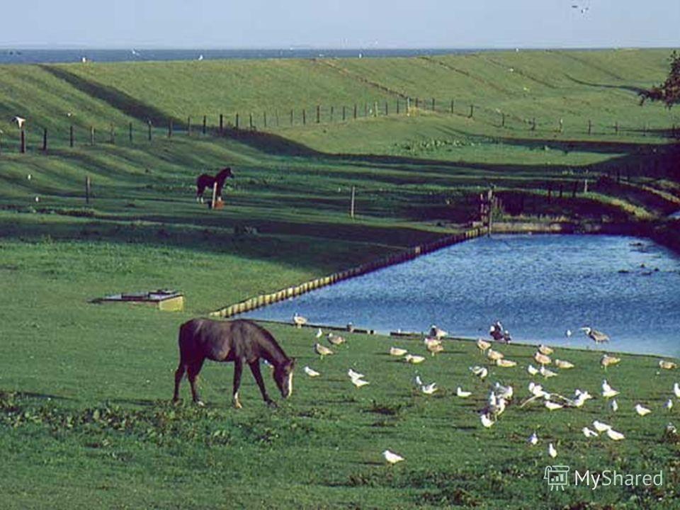 На протяжении веков жители Нидерландов защищались от наступления моря с помощью дамб – земельных насыпей.