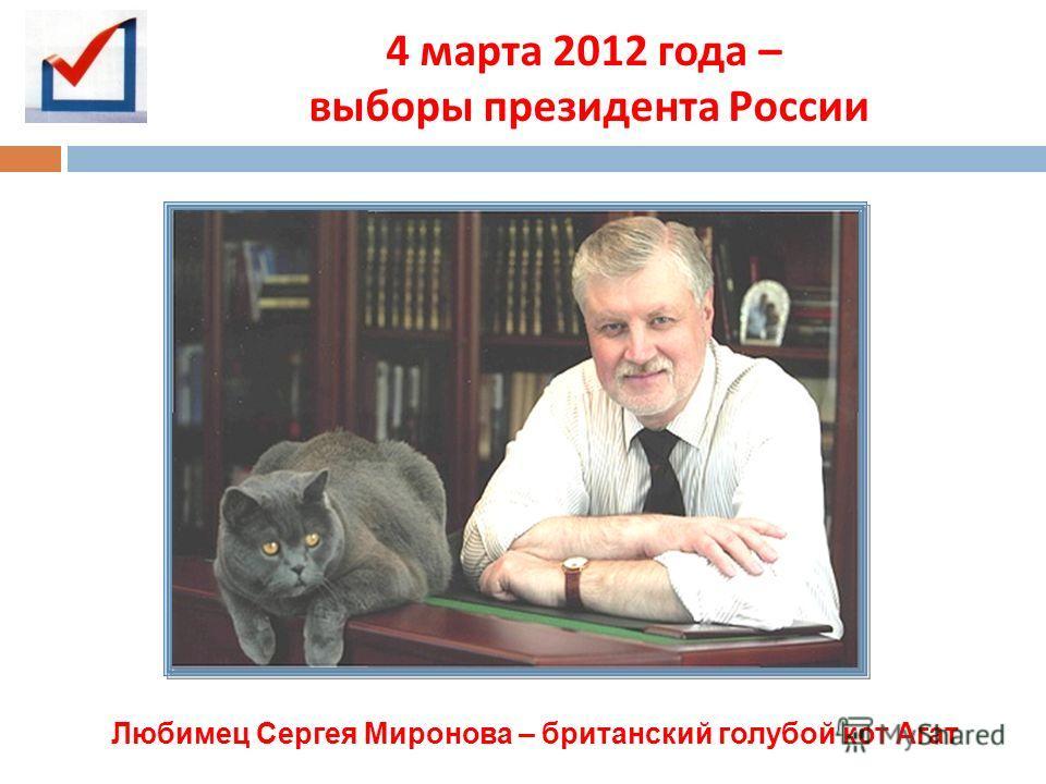 4 марта 2012 года – выборы президента России Любимец Сергея Миронова – британский голубой кот Агат