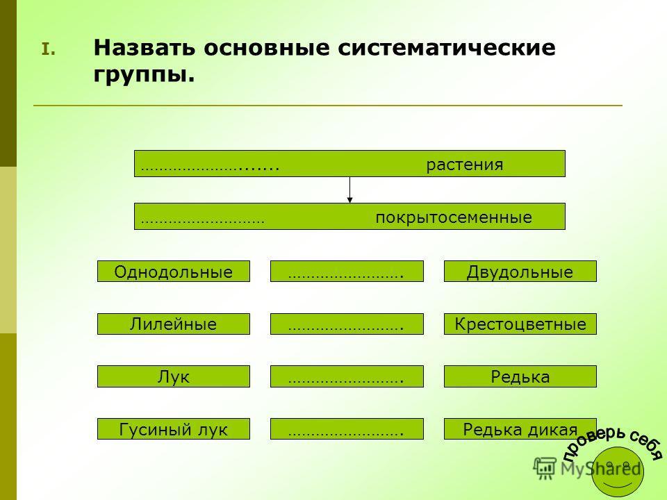 I. Назвать основные систематические группы. …………………....... растения ……………………… покрытосеменные Однодольные Лилейные Лук Гусиный лук ……………………. Двудольные Крестоцветные Редька Редька дикая