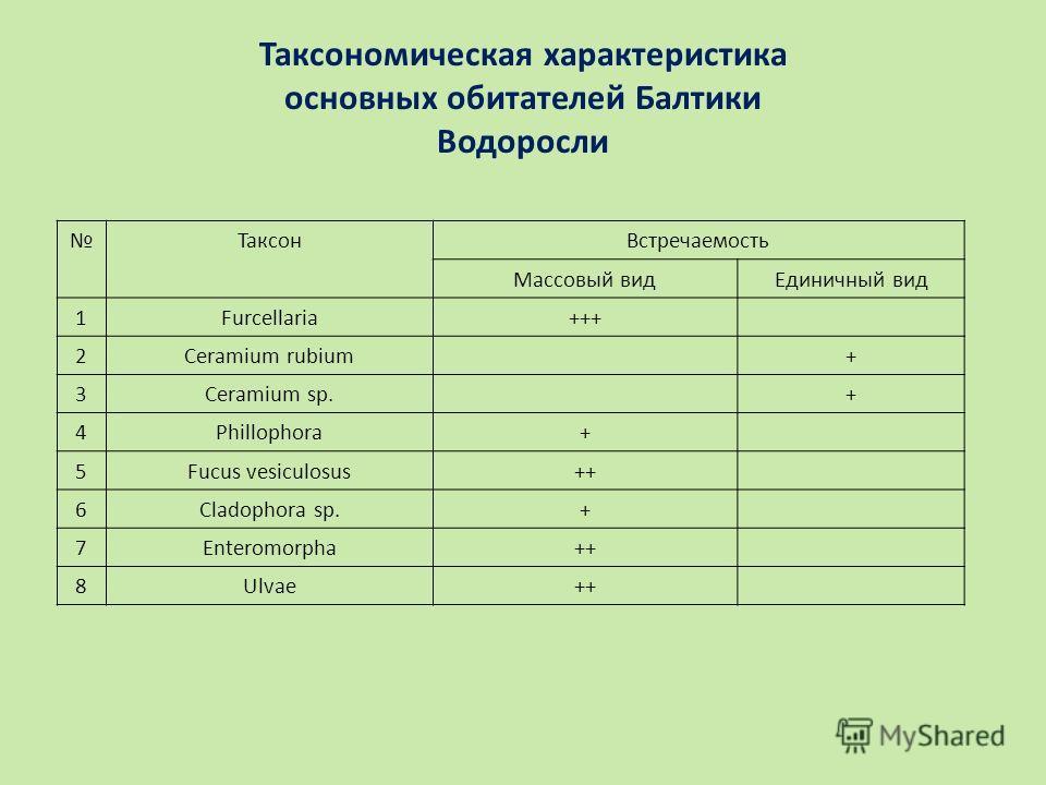 Таксономическая характеристика основных обитателей Балтики Водоросли ТаксонВстречаемость Массовый видЕдиничный вид 1Furcellaria+++ 2Ceramium rubium+ 3Ceramium sp.+ 4Phillophora+ 5Fucus vesiculosus++ 6Cladophora sp.+ 7Enteromorpha++ 8Ulvae++