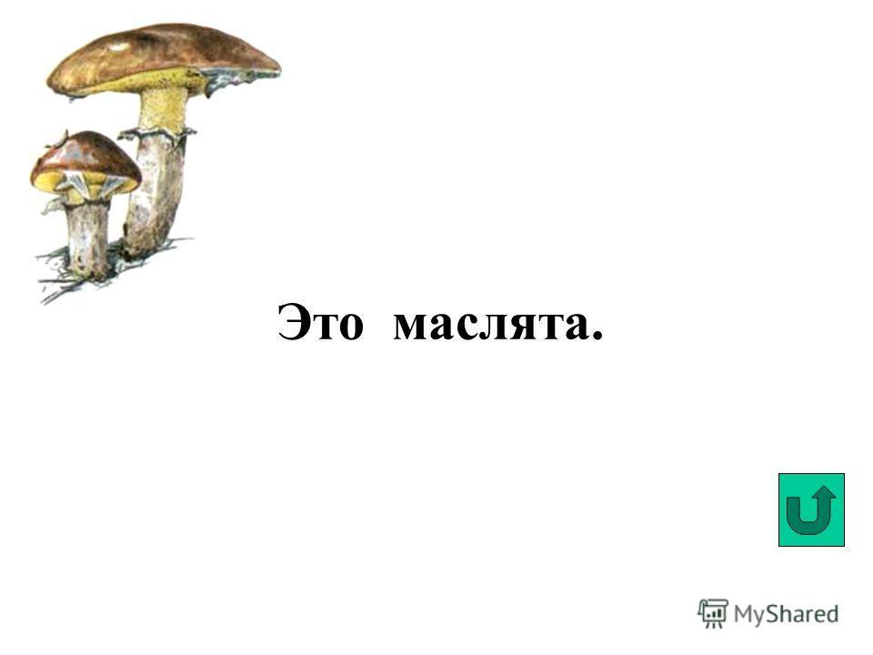 Это белый гриб.