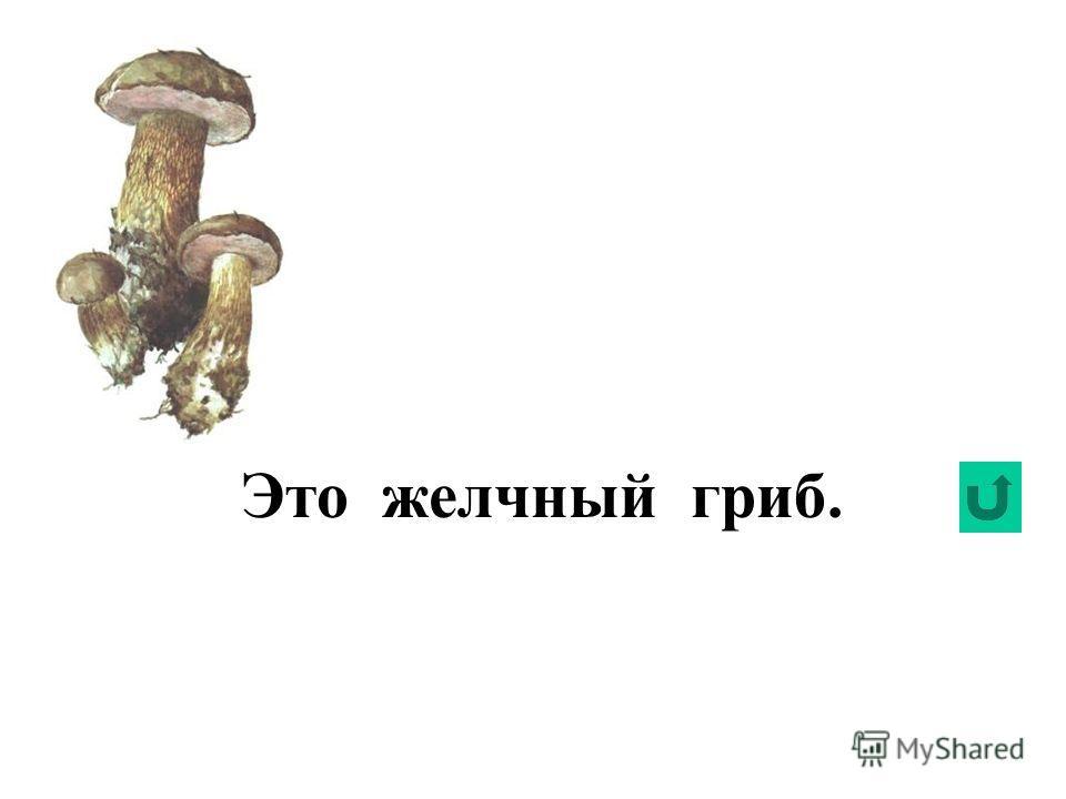 Это сатанинский гриб.