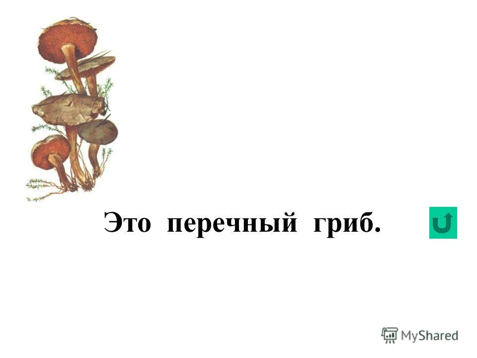 Это желчный гриб.